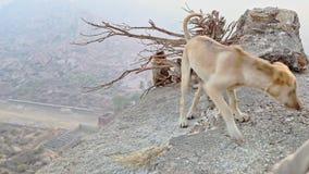 Affe-Fell hinter Wurzeln auf Abgrund-Hund sucht Lebensmittel stock footage