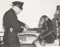 Affe Fingerabdrücke genommen vom Polizeibeamten Lizenzfreies Stockbild