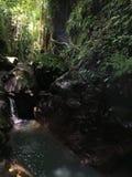 Affe Forest Sanctuary Padangtegal Mandala Wisata Wanara Wana Sacred in Ubud, Bali, Indonesien Stockfotos