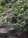Affe Forest Sanctuary Padangtegal Mandala Wisata Wanara Wana Sacred in Ubud, Bali, Indonesien Lizenzfreie Stockbilder