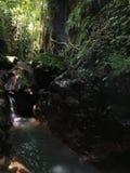 Affe Forest Sanctuary Padangtegal Mandala Wisata Wanara Wana Sacred in Ubud, Bali, Indonesien Lizenzfreie Stockfotografie