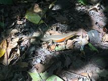 Affe Forest Sanctuary Padangtegal Mandala Wisata Wanara Wana Sacred in Ubud, Bali, Indonesien Stockfoto