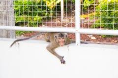 Affe gehen unter den Käfig Lizenzfreie Stockbilder
