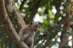 Affe gehockt auf einem Baum Stockfotografie