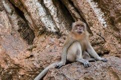 Affe gehockt auf einem Felsen Lizenzfreies Stockfoto