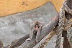 Affe geht auf den Klotz Lizenzfreie Stockfotografie