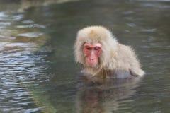 Affe genießen onsen auf japanisch Stockbild