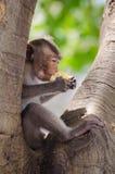 Affe genießen zu essen Stockfotografie