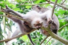 Affe genießt eine Massage - Archivbild Stockbilder