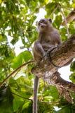 Affe gesetzt auf einem Baumast Lizenzfreie Stockbilder