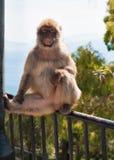 Affe in Gibraltar Lizenzfreies Stockfoto