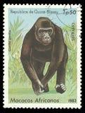 Affe, Gorilla Stockbilder