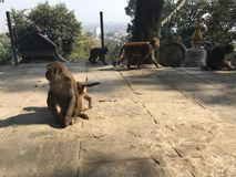 Affe an Hügel Swayambhunath Stupa in Kathmandu-Stadt im Kathmandutal, Nepal Lizenzfreies Stockfoto