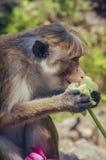 Affe, halten Blumen Lizenzfreie Stockfotos