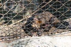Affe halten zurück Lizenzfreie Stockfotografie