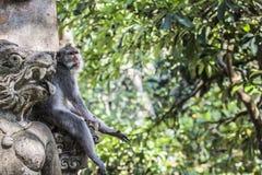 Affe am heiligen Affe-Wald, Ubud, Bali, Indonesien Stockfotografie