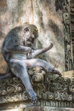 Affe am heiligen Affe-Wald, Ubud, Bali, Indonesien Lizenzfreies Stockfoto