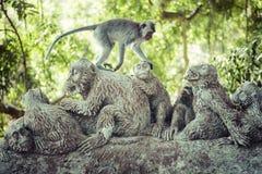 Affe am heiligen Affe-Wald, Ubud, Bali, Indonesien Lizenzfreie Stockfotos