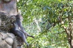 Affe am heiligen Affe-Wald, Ubud, Bali, Indonesien Stockfoto
