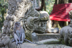 Affe am heiligen Affe-Wald, Ubud, Bali, Indonesien Stockfotos