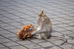 Affe am heiligen Affewald indonesien Lizenzfreies Stockbild