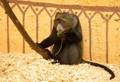 Affe hinter dem Glas im Zoo Lizenzfreie Stockfotos