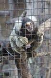 Affe hinter dem Zaun Lizenzfreie Stockbilder