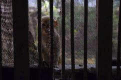 Affe hinter den Stangen Stockbilder