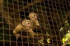 Affe hinter den Stangen Stockbild