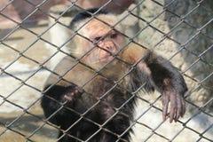 Affe hinter den Zoostangen Stockbilder