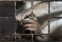 Affe hinter Gittern Stockfotos