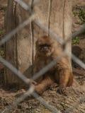 Affe hinter Käfig Stockfotografie
