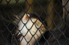 Affe hinter Zaun Lizenzfreie Stockfotografie