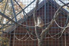 Affe hinter Zaun in Käfig 01 Lizenzfreies Stockbild