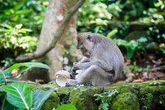 Affe im Affewald, Indonesien Lizenzfreies Stockfoto