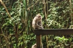 Affe im asiatischen Regenwald Stockfotografie