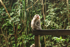 Affe im asiatischen Regenwald Stockbilder