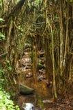 Affe im asiatischen Regenwald Stockbild