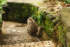 Affe im asiatischen Regenwald Lizenzfreie Stockfotos