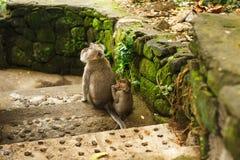 Affe im asiatischen Regenwald Lizenzfreie Stockbilder