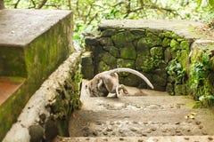 Affe im asiatischen Regenwald Lizenzfreies Stockbild