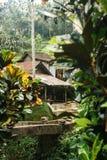 Affe im asiatischen Regenwald Lizenzfreie Stockfotografie