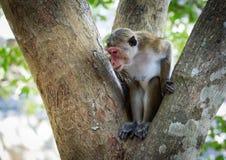 Affe im Baum im Dschungel Lizenzfreie Stockfotografie
