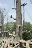 Affe im Baum am Zoo Lizenzfreie Stockfotografie