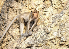 Affe im Berg Lizenzfreies Stockbild