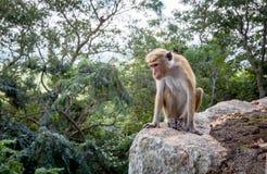 Affe im Dschungel Stockfoto