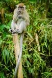 Affe im Dschungel Stockfotografie