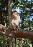 Affe im Dschungel goa Indien Lizenzfreie Stockfotos