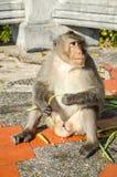 Affe im Garten Lizenzfreies Stockbild