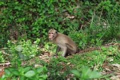 Affe im Garten Stockbilder
